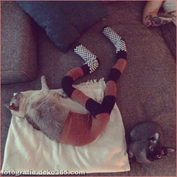 Katzen mit Strumpfhosen sind viel lustiger als Hunde mit Strumpfhosen (4)