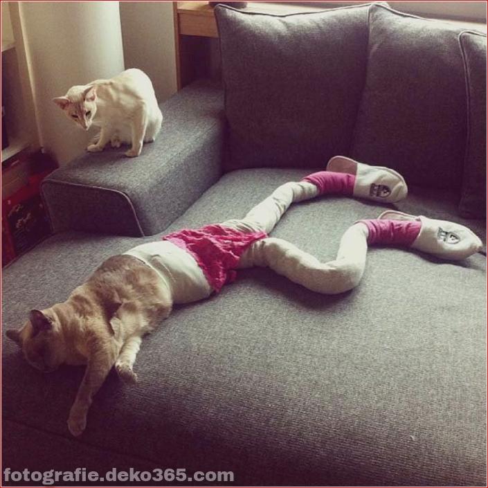 Katzen mit Strumpfhosen sind viel lustiger als Hunde mit Strumpfhosen (9)