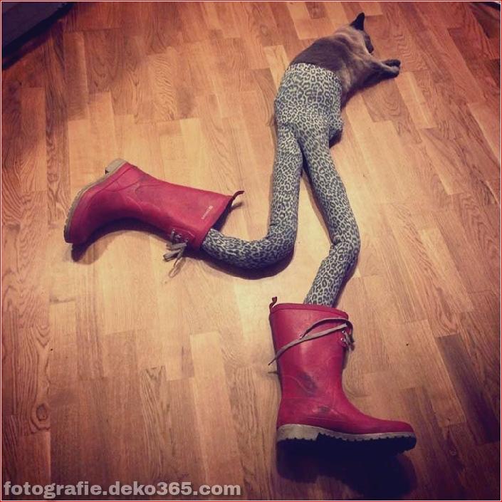 Katzen mit Strumpfhosen sind viel lustiger als Hunde mit Strumpfhosen (10)