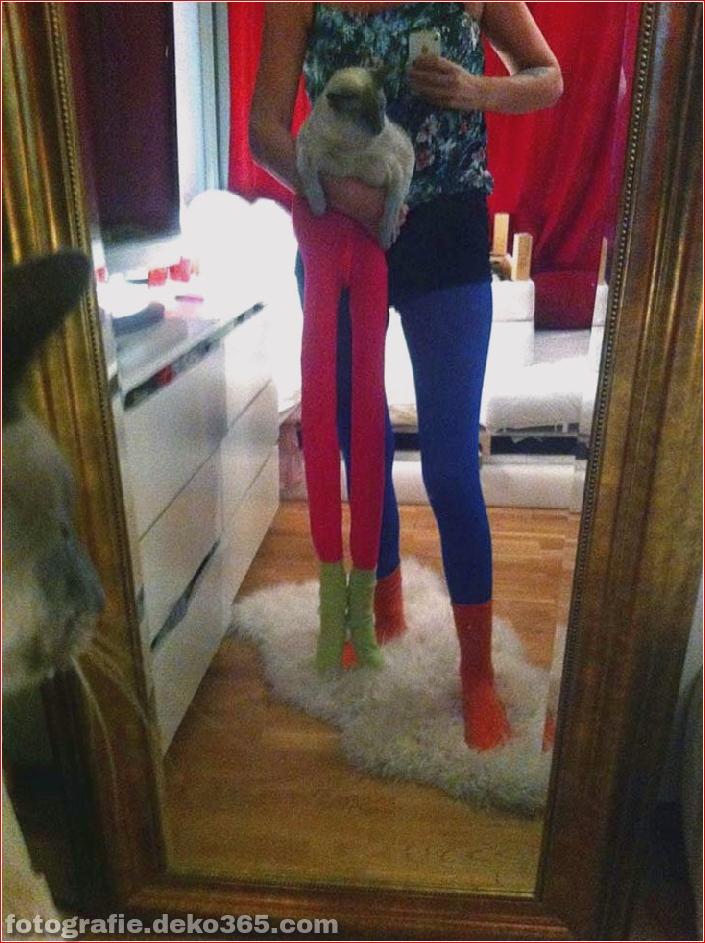 Katzen mit Strumpfhosen sind viel lustiger als Hunde mit Strumpfhosen (12)