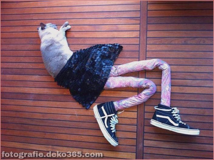 Katzen mit Strumpfhosen sind viel lustiger als Hunde mit Strumpfhosen (14)