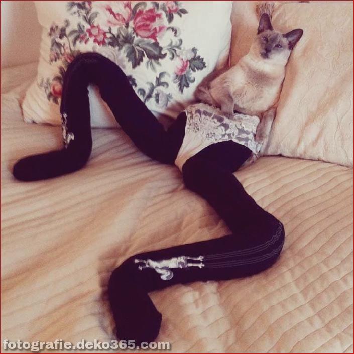 Katzen mit Strumpfhosen sind viel lustiger als Hunde mit Strumpfhosen (15)
