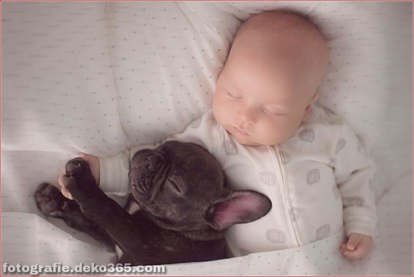Baby- und Bulldogge-Fotografie (5)