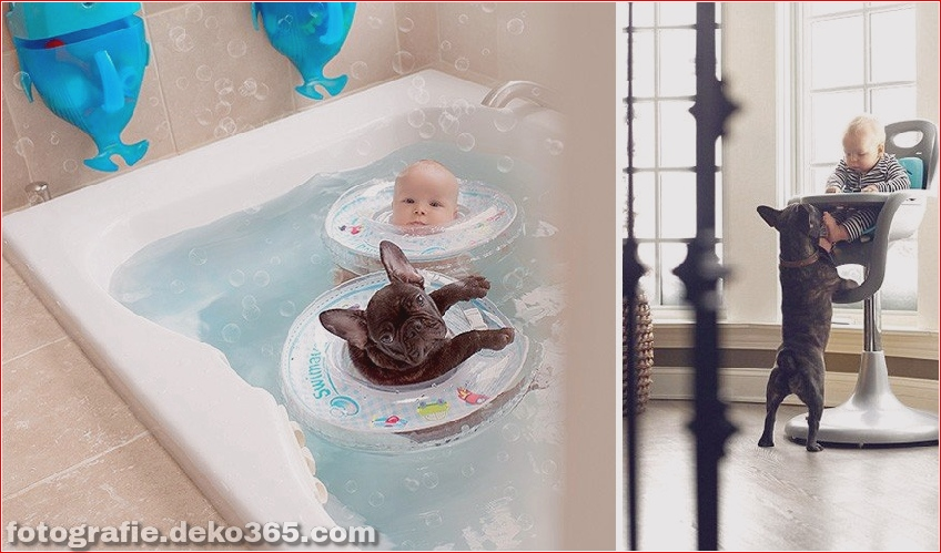 Baby- und Bulldogge-Fotografie (6)