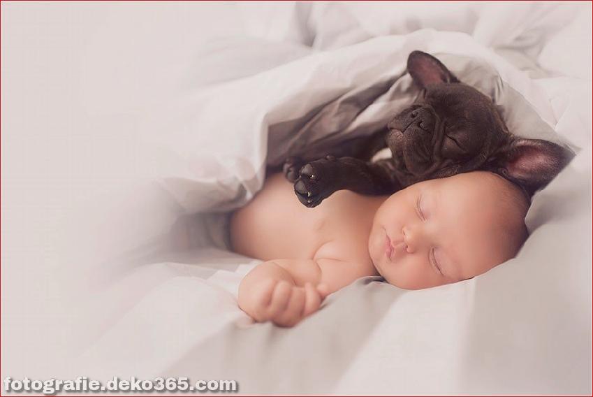 Baby- und Bulldogge-Fotografie (7)