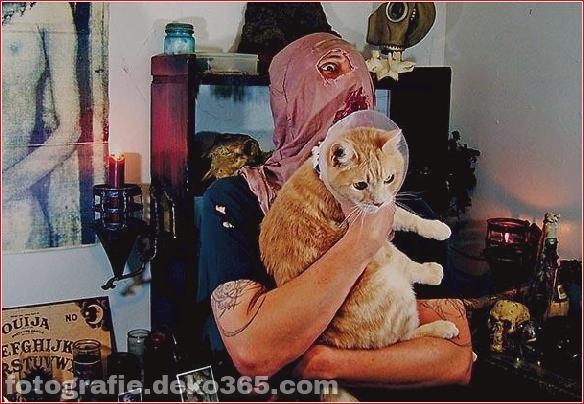 Süße Katzen und die Metalheads, die sie lieben (1)