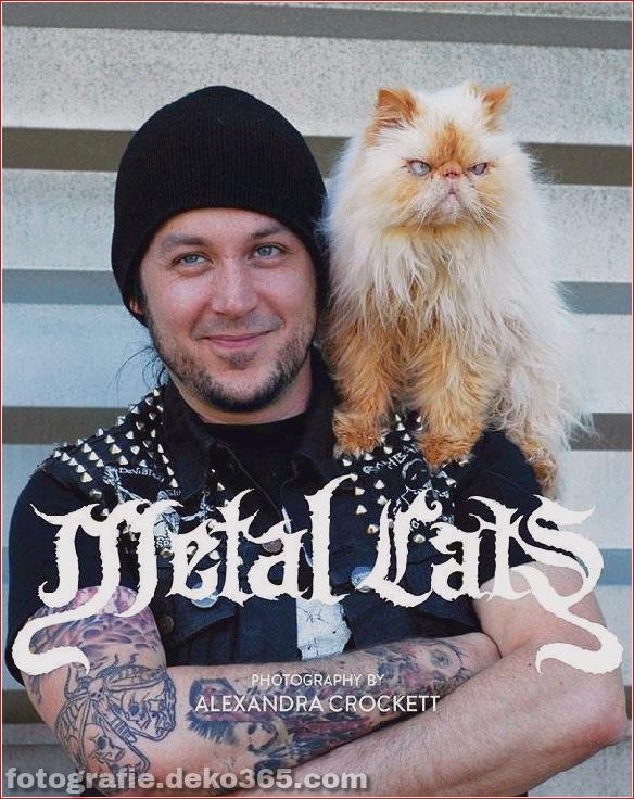 Süße Katzen und die Metalheads, die sie lieben (3)
