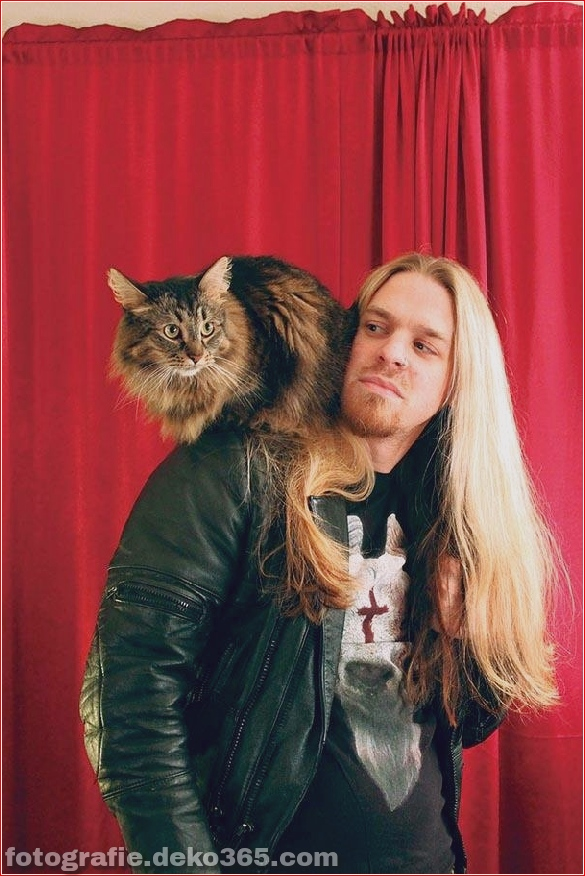 Süße Katzen und die Metalheads, die sie lieben (9)