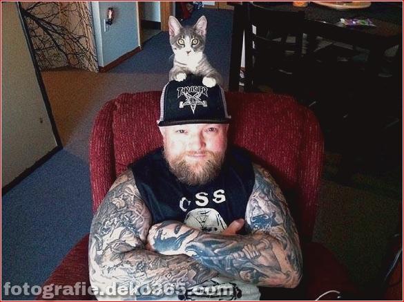 Süße Katzen und die Metalheads, die sie lieben (10)