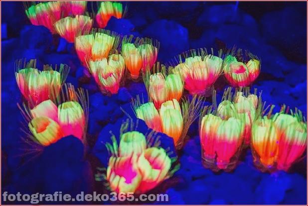 Mid-Autumn Festival_5c90394f8978f.jpg