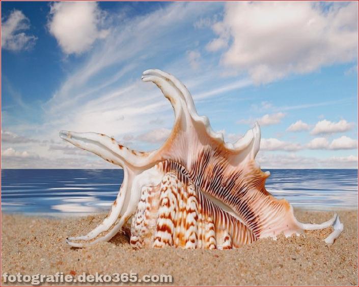 Muscheln am Strand (1)