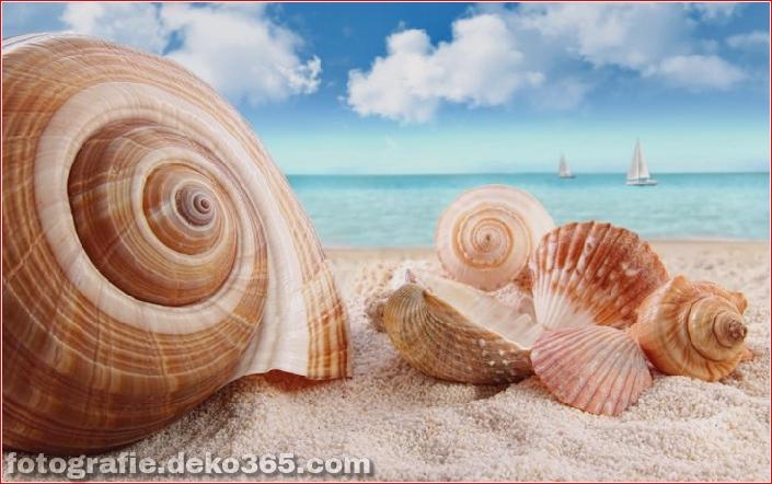 Muscheln am Strand (2)