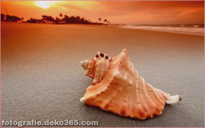 Muscheln am Strand (6)
