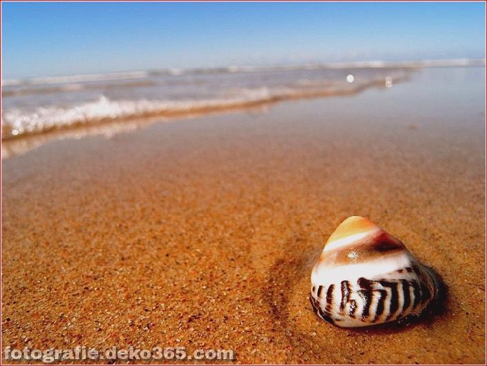 Muscheln am Strand (7)