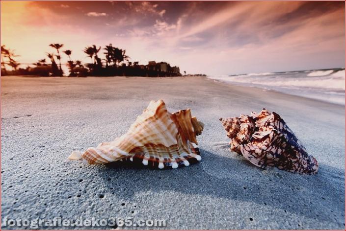 Muscheln am Strand (8)