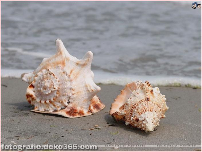 Muscheln am Strand (11)