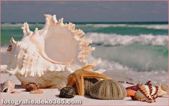 Muscheln am Strand (12)