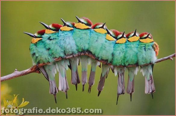 Schöne Tierbilder (1)