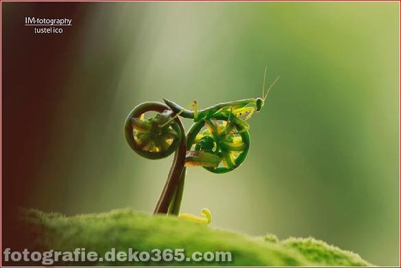Schöne Tierbilder (2)