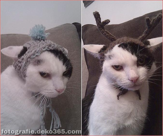 Niedliche Katzenhüte Kostüm Ideen (1)