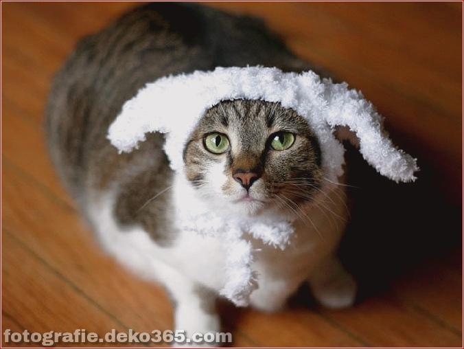 Niedliche Katzenhüte Kostüm Ideen (2)