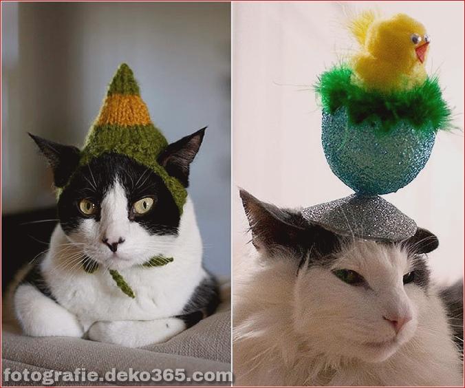 Niedliche Katzenhüte Kostüm Ideen (3)