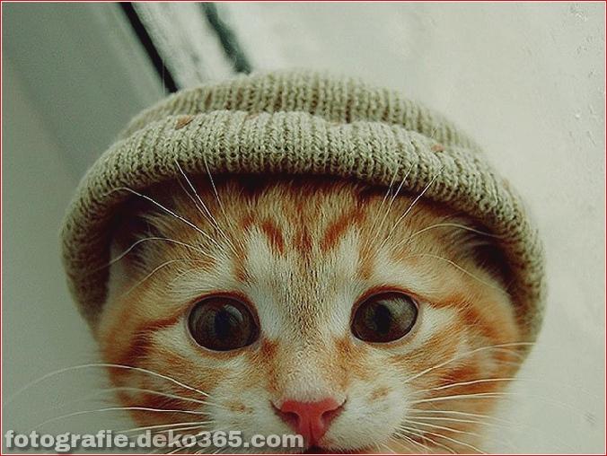 Niedliche Katzenhüte Kostüm Ideen (4)