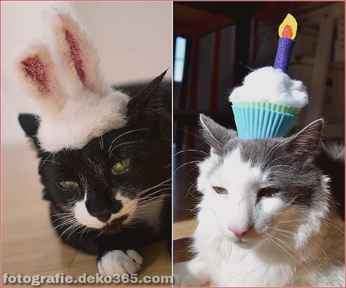 Niedliche Katzenhüte Kostüm Ideen (5)