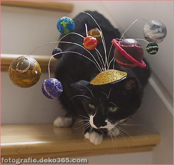 Niedliche Katzenhüte Kostüm Ideen (6)