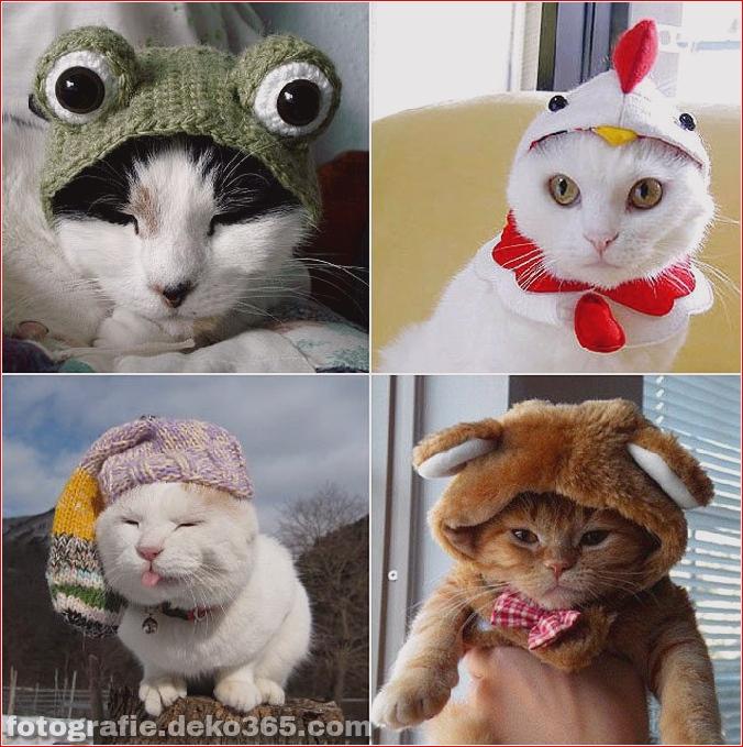 Niedliche Katzenhüte Kostüm Ideen (7)