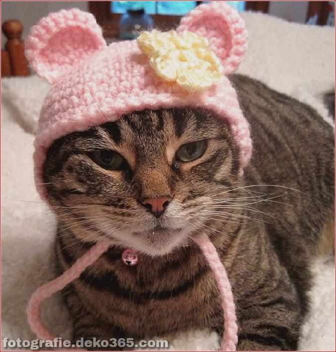Niedliche Katzenhüte Kostüm Ideen (8)