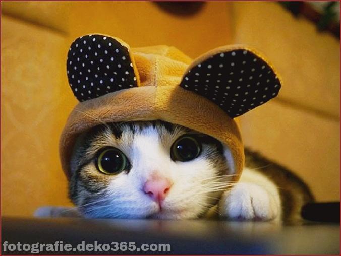 Niedliche Katzenhüte Kostüm Ideen (9)