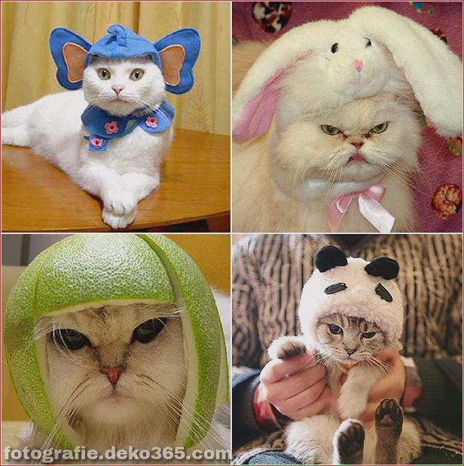 Niedliche Katzenhüte Kostüm Ideen (10)