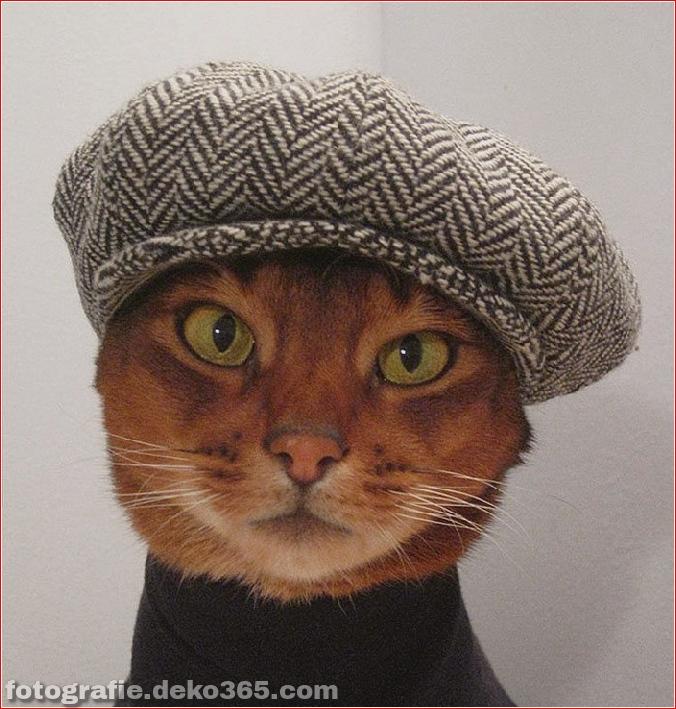 Niedliche Katzenhüte Kostüm Ideen (11)