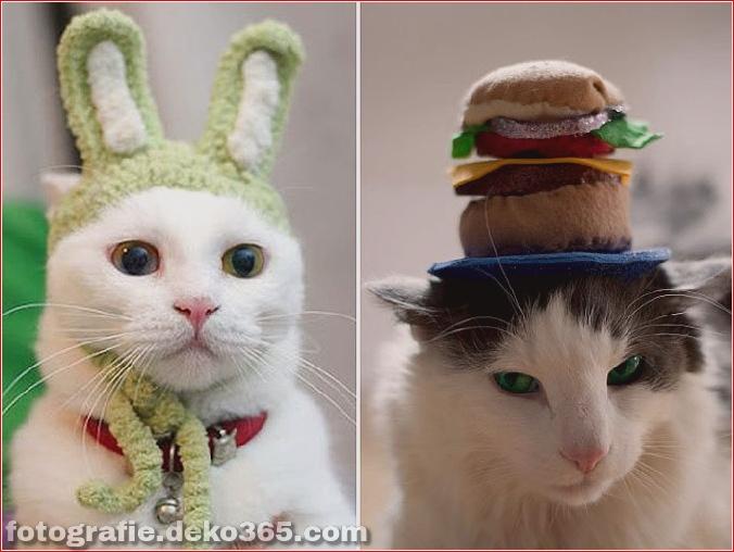 Niedliche Katzenhüte Kostüm Ideen (12)