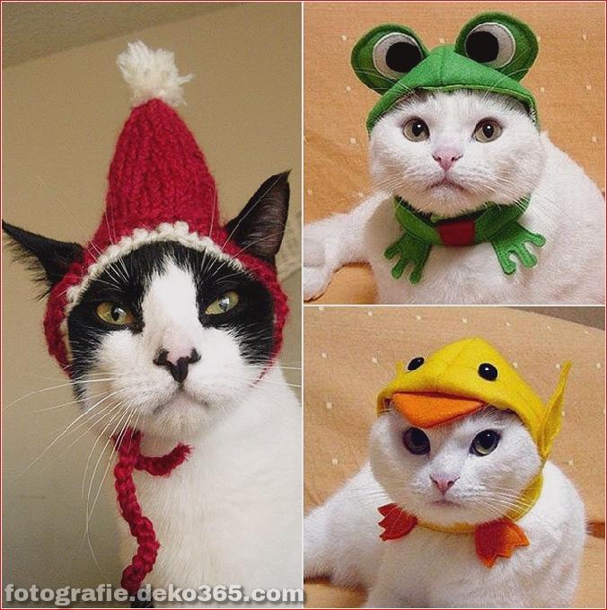 Niedliche Katzenhüte Kostüm Ideen (14)