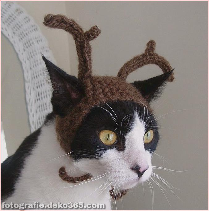 Niedliche Katzenhüte Kostüm Ideen (15)