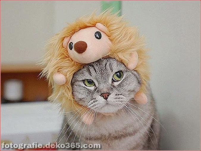 Niedliche Katzenhüte Kostüm Ideen (16)