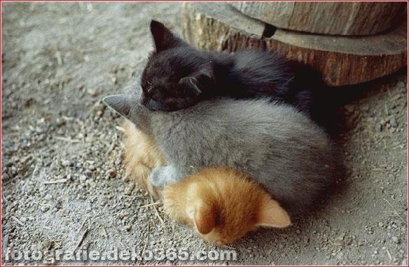 schöne Tiere, die andere Tiere als Kissen verwenden (1)