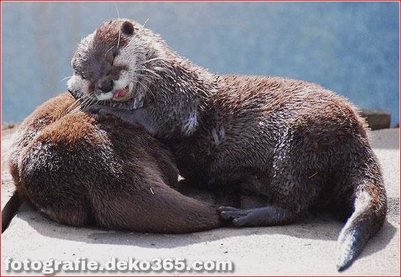 schöne Tiere, die andere Tiere als Kissen verwenden (2)