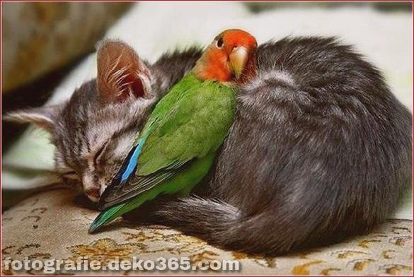schöne Tiere, die andere Tiere als Kissen verwenden (3)