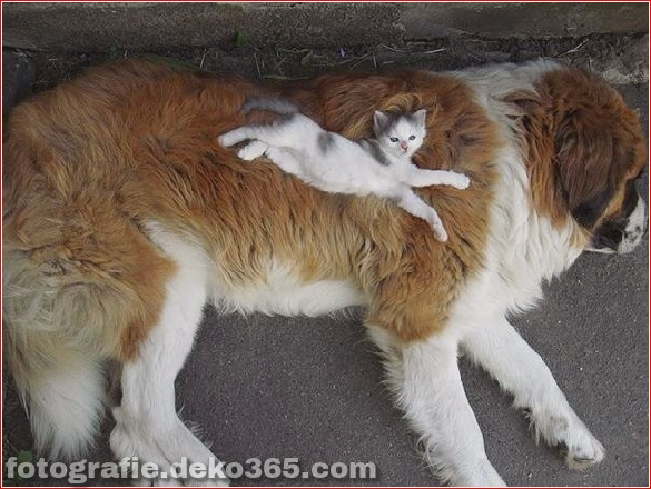 schöne Tiere, die andere Tiere als Kissen verwenden (4)