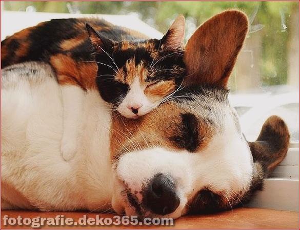 schöne tiere, die andere tiere als kissen verwenden (9)