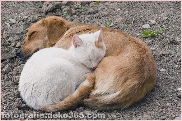 schöne tiere, die andere tiere als kissen verwenden (11)