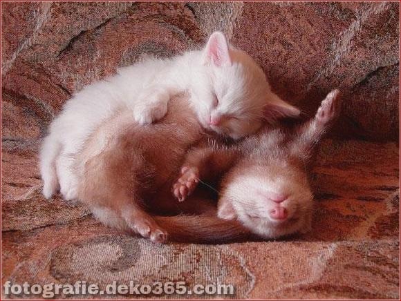 schöne tiere, die andere tiere als kissen verwenden (16)
