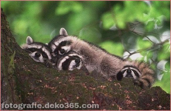schöne tiere, die andere tiere als kissen verwenden (18)