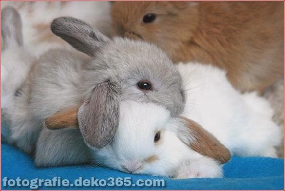 schöne tiere, die andere tiere als kissen verwenden (20)