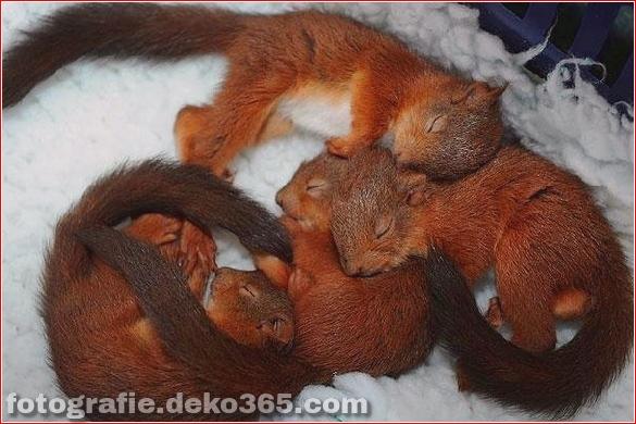 schöne tiere, die andere tiere als kissen verwenden (27)