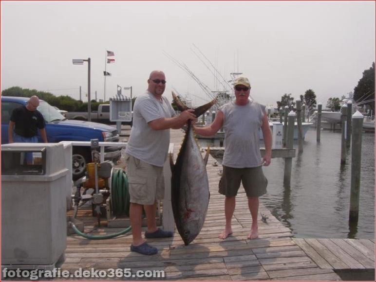 Erfolgreiche Fangbilder - Oregon Inlet Fishing (3)