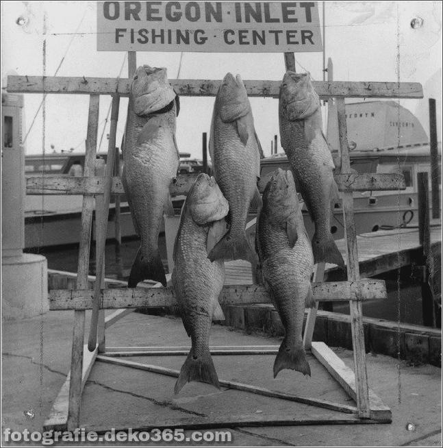 Erfolgreiche Fangbilder - Oregon Inlet Fishing (5)
